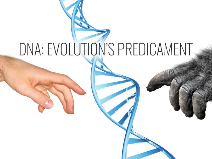DNA: Evolution's Predicament